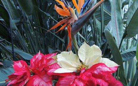 Fort Wayne Botanical Conservatory